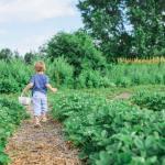 Perché sono utili le consociazioni dell'orto