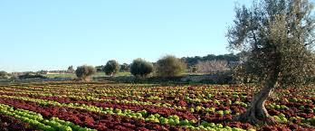 Il decalogo della Confederazione Italiana Agricoltori per un'agricoltura sostenibile