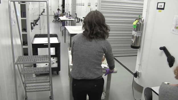 A gloved, cardigan-ed museum worker pushing a rolling cart down a hallway of large white shelving units.