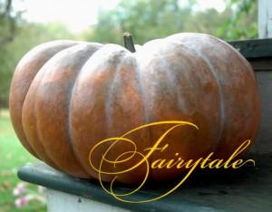 fairytale-squash-lg