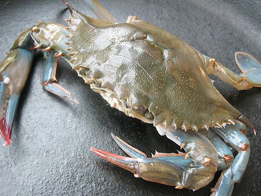What are Soft Shell Crabs?