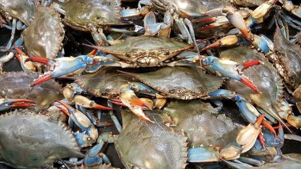 2019 Maryland blue crab season officially begins | Cooper's