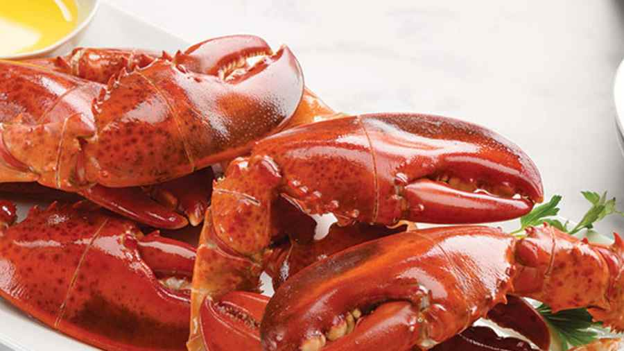 1 lb. Steamed Lobster Claws 12.95