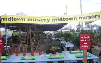Midtown Nursery