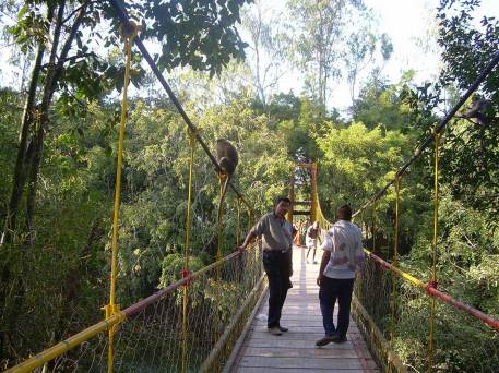 nisargadhama-hanging-bridge