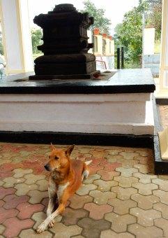 13---A-Spiritual-Messenger-at-Mruthunjaya-Temple
