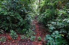 19---Path-leading-to-the-Devara-Kaadu-of-Sri-Kotiaalu-Eshwara-Temple
