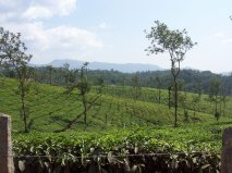 3-Glenlorna-Tea-Estate