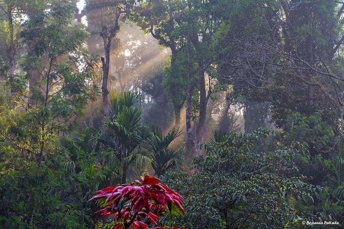 misty plantation 1