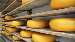 Police Bust Cheese Smuggling Ring; Officer Arrested
