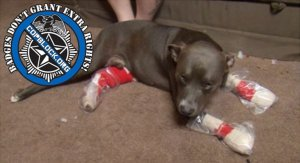 "Tampa Cop ""Forced To Fire Two Rounds"" At Tied Up Dog"