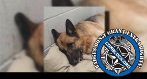Woman Calls 911 For Fear Of Pervert, Cop Shoots Her Dog In The Face