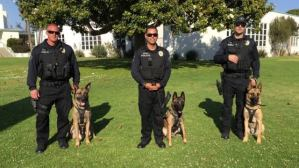 Should Fresno Ban The Use Of Police K9s (A Response)