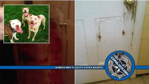 """Lawsuit: Cops """"Stormed Through House Executing Dogs"""" During Pot Search"""