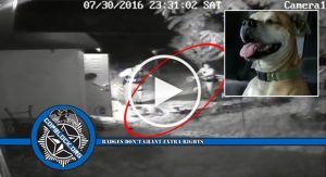 Video Shows Kansas City Cop Kill Dog As It Runs Away