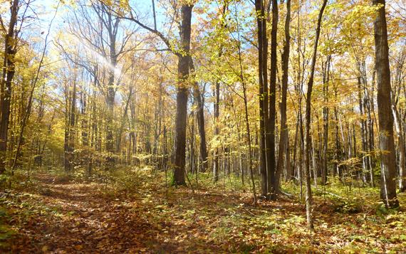 Fall Light in Copeland
