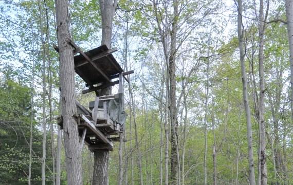 Deer Hunting platform in tree near 5th line