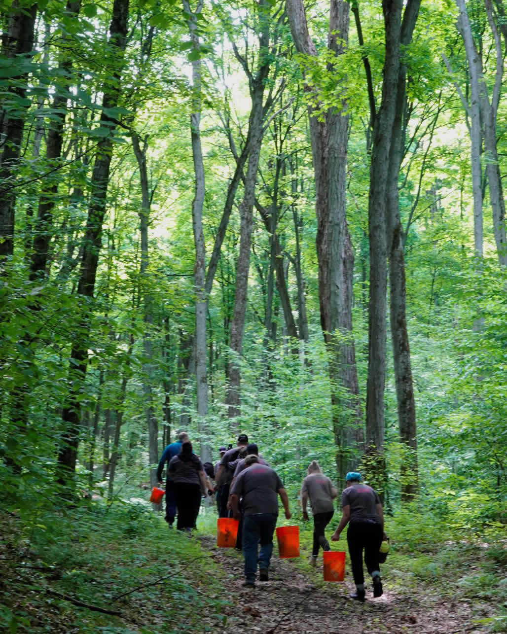volunteers carrying orange buckets walking on a trail in the copeland forest