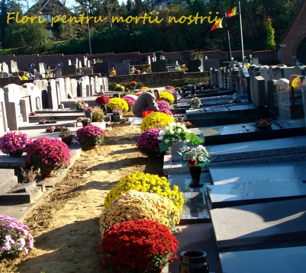 flori-1-nov-2012-15