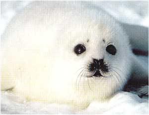 Imagini pentru imagini cu focă