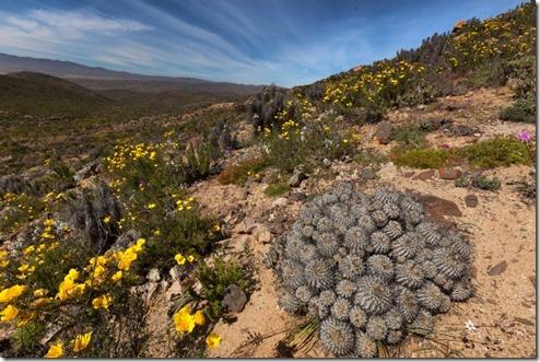 desierto florido 1