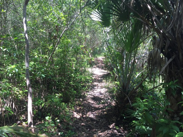 Coral Gables secret nature trail and dog park. Click to read more or pin and save for later!