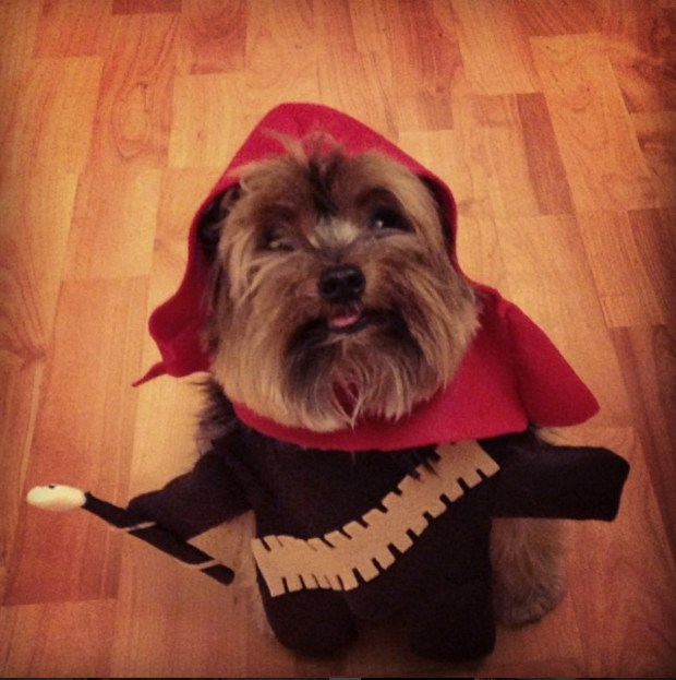 Pancho wearing an Ewok costume for the Coral Gables Museum Dog custom contest