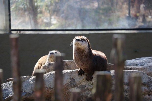 Asheville North Carolina Travel Guide - Nature Center Otters