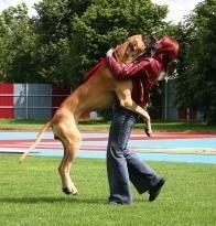 cane saltare addosso 4zampe corciano-centro eventiecultura