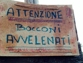 20140824_bocconi_avvelenati-800x533