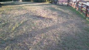San Mariano, i giardini del Castello in pessime condizioni: l'impianto di irrigazione non funziona 2