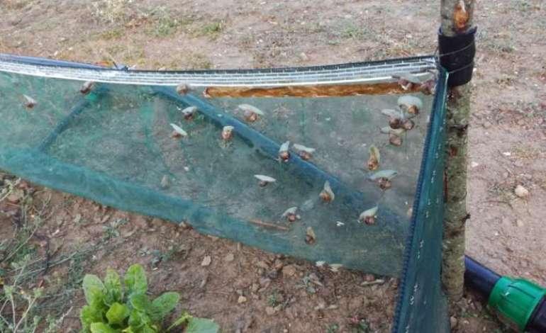 allevamento lumache (1)