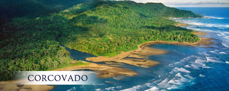 Read more about the article Corcovado National Park Costa Rica
