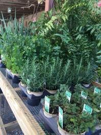 fresh herbed plants available at core feed