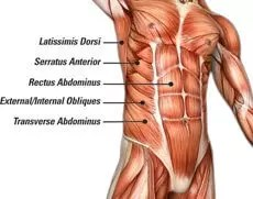 What is CORE in human body