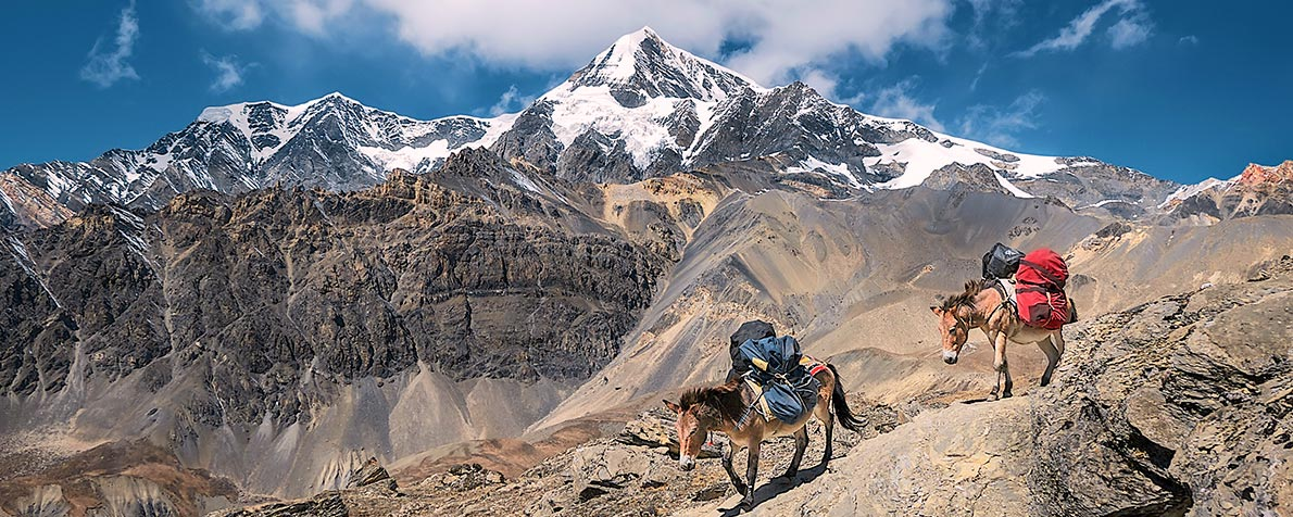 trek to the himalayas