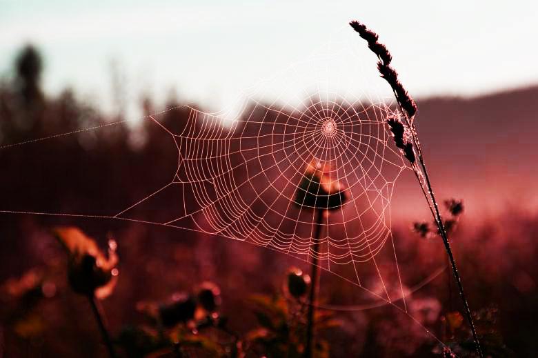spiderWeb field recolored