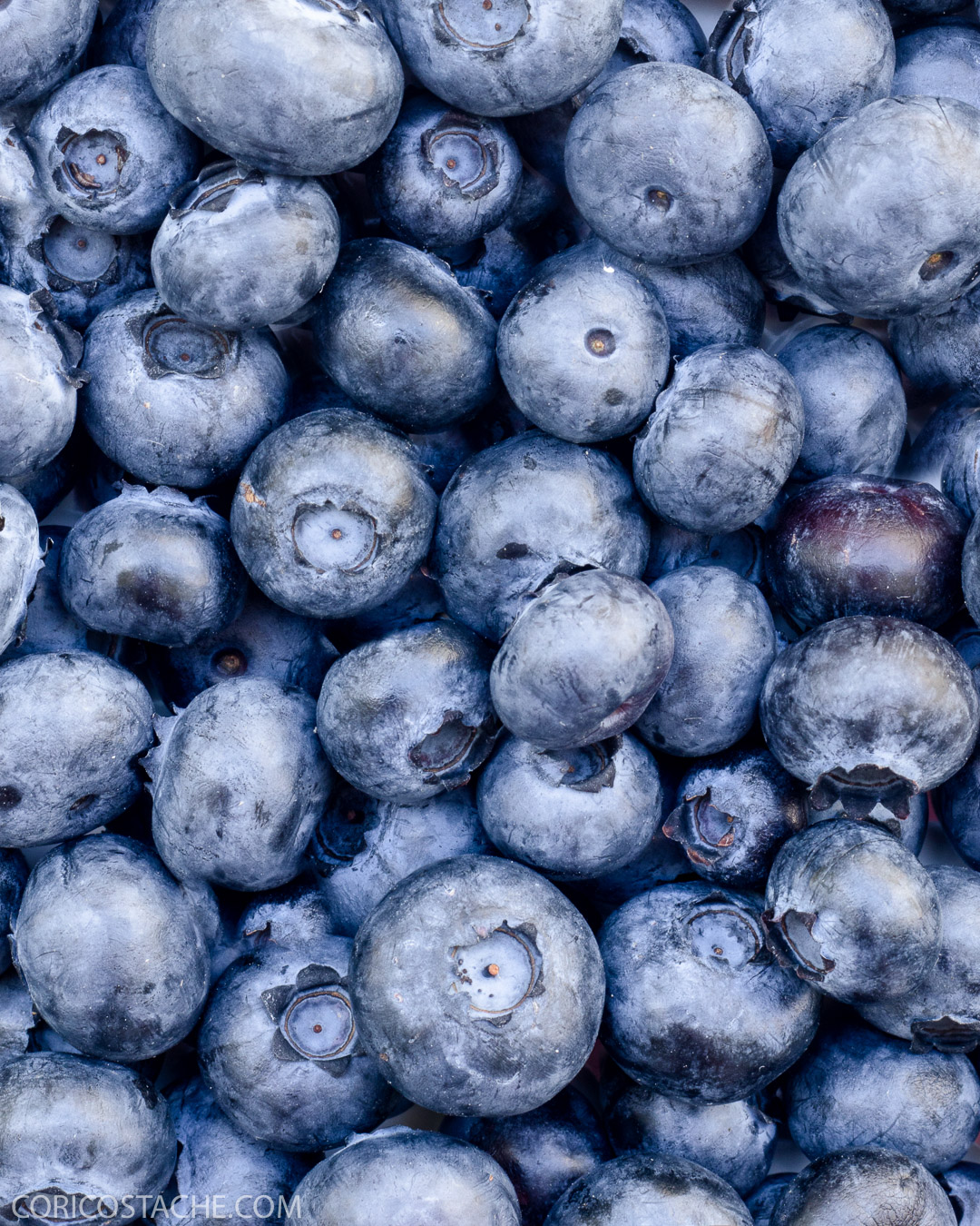 blueberry food photography