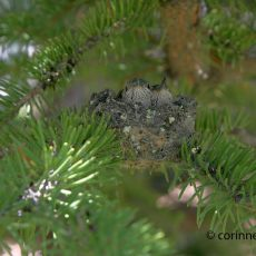 Baby Hummingbirds Have Hatched!
