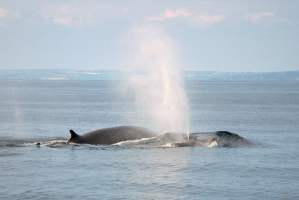West Cork Whale Watching Trips
