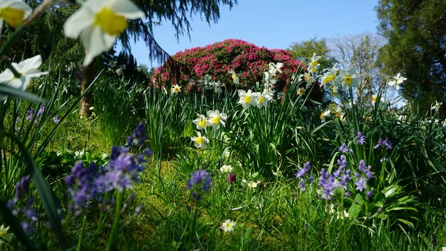 Cornish Gardens To Explore This Spring