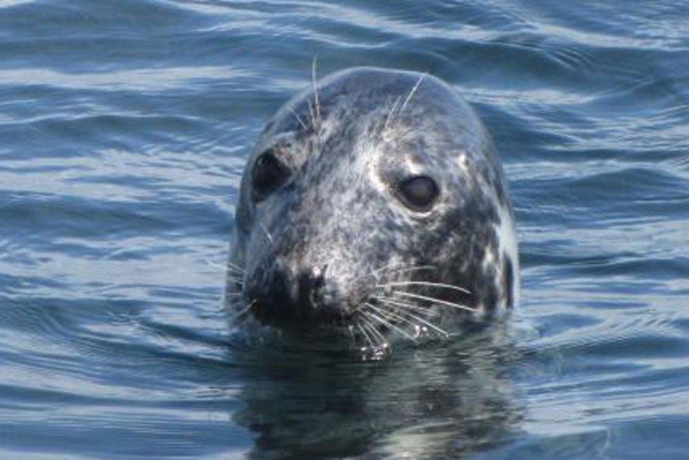 'Top Spots' For Wildlife Along The Cornish Coast