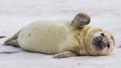 Cornish Seal Sanctuary – The Seal Pup Season – January-March
