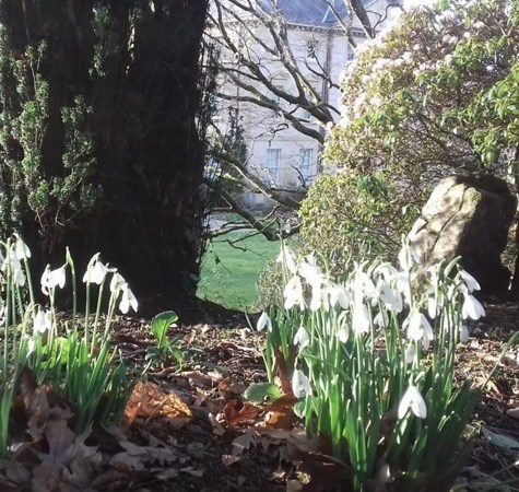 Pencarrow House & Gardens – Snowdrop Sundays – 9th & 16th February 2020