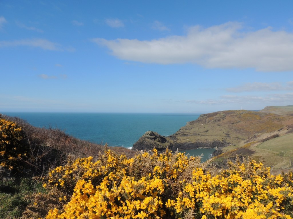 Boscastle Cliffs