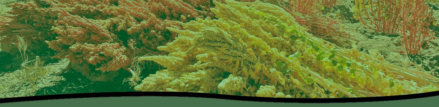 https://i2.wp.com/www.corpalen.com/wp-content/uploads/2020/08/banner-superfood.png?fit=1400%2C342&ssl=1