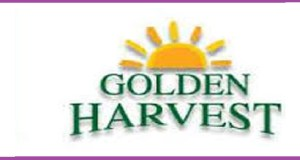 goldren hervest