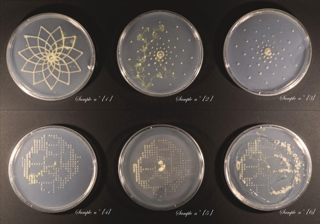 Officina-Corpuscoli-BioLogic-timelapse-overlap-frames