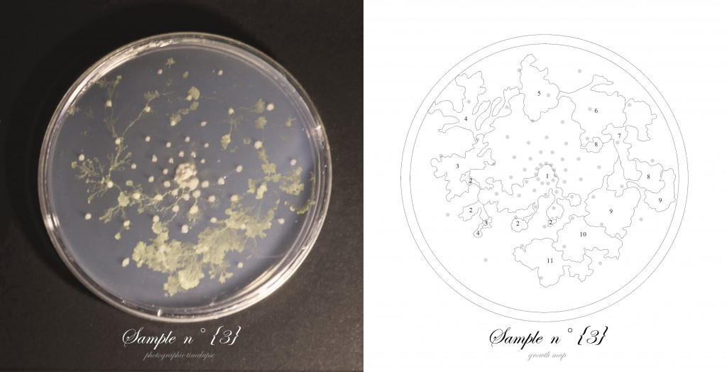 Officina-Corpuscoli-BioLogic-timelapse-overlap-frames-sample03