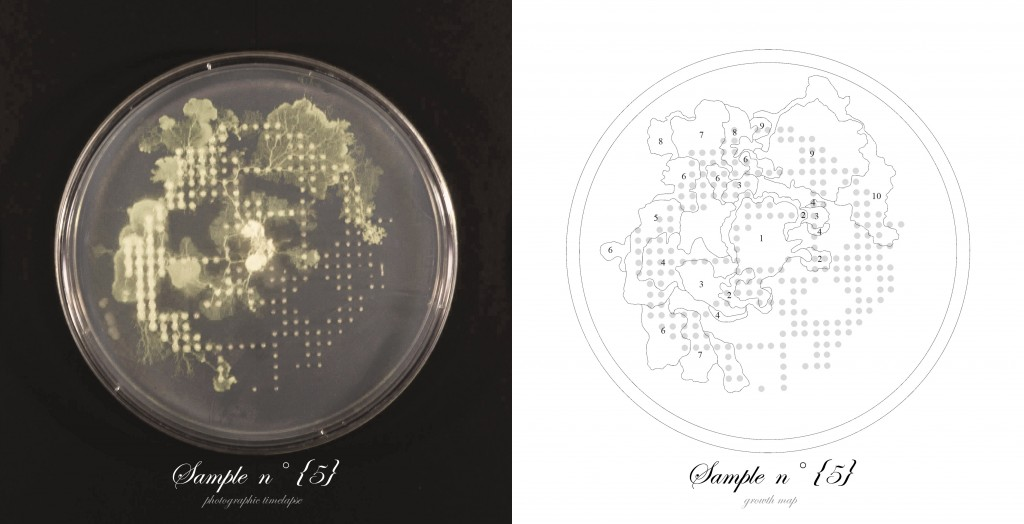 Officina-Corpuscoli-BioLogic-timelapse-overlap-frames-sample05
